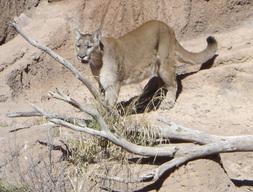 Arizona_2006_096_3