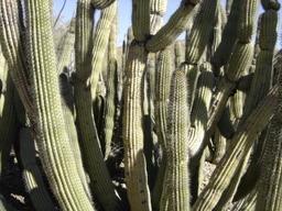 Arizona_2006_100