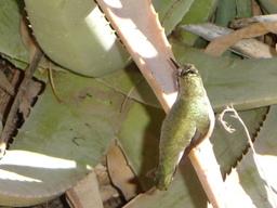 Arizona_2006_135