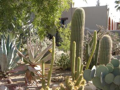 Arizona_2006_244